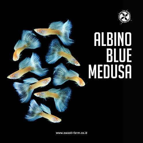 ALBINO BLUE MEDUSA
