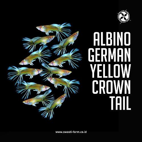 ALBINO GERMAN YELLOW CROWN TAIL