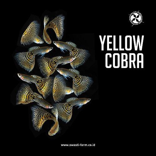 YELLOW COBRA