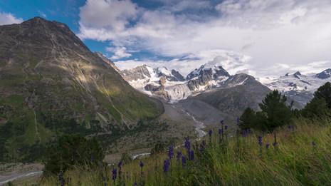 Time lapse aconite Bernina.mp4