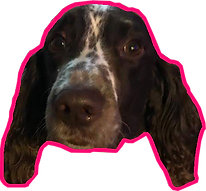 gus neon pink.png