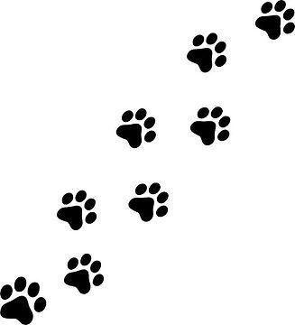 panther tracks.jpg