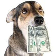 picture of dog with money