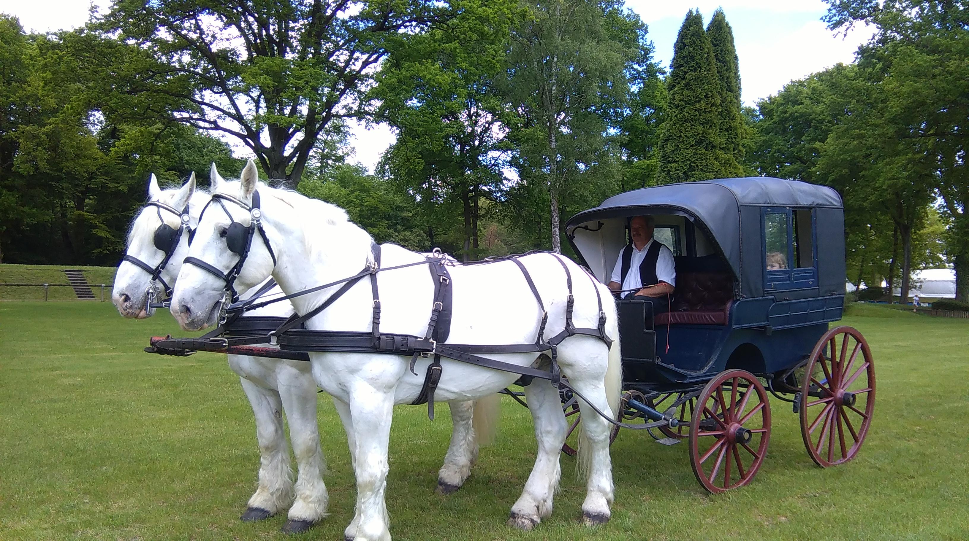 chevaux boulonnais