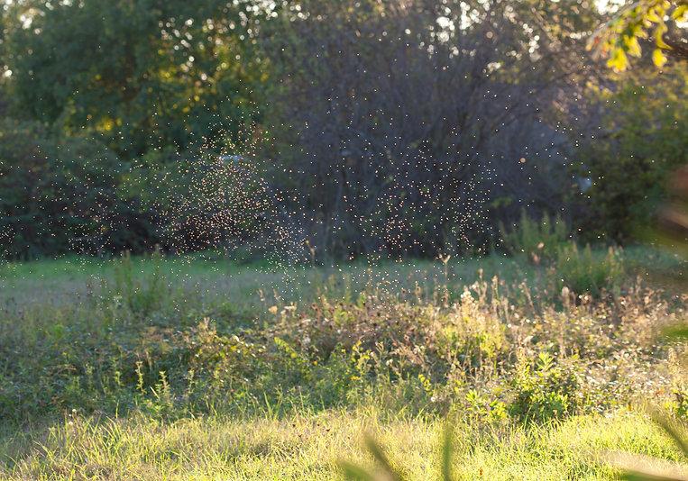 mosquitos grass iStock-623200630.jpg