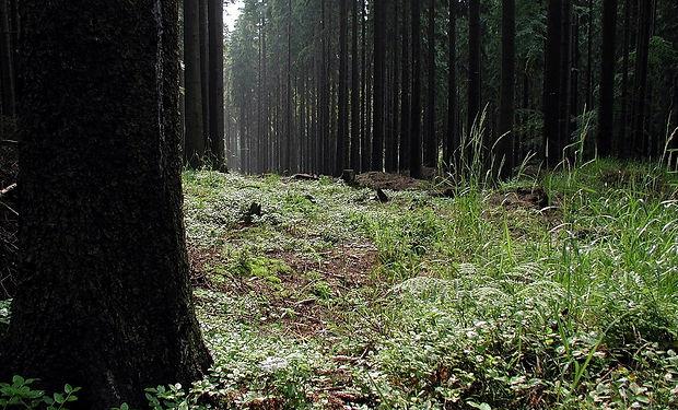 Forest_at_Dusk.jpg