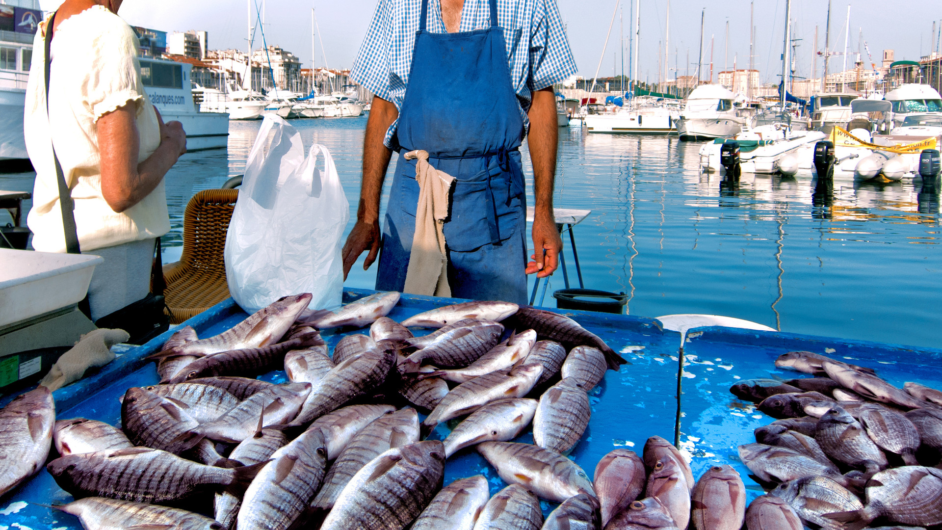 pêche du matin