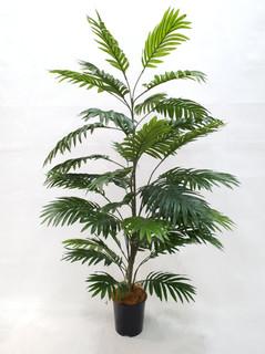 Areca Palm Tree (4ft)