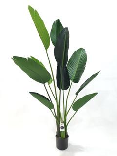 Traveller Palm (5ft)