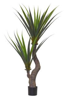 Pandanus Tree (5ft)