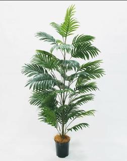 Areca Palm Tree (5ft)