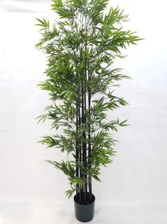 Mini Black Bamboo Tree (7ft)