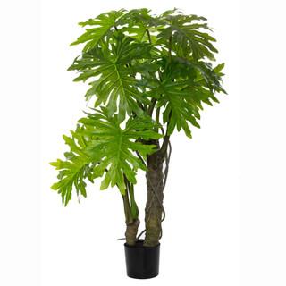 Plume Split Leaf Plant (5ft)