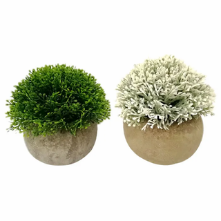 Foliage in Round Pot