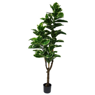 Variegated Rubber Tree (6ft) [Real Touch]