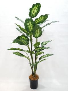 Dieffenbachia Plant (3.5ft)