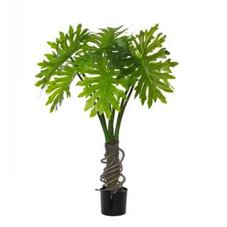Plume Split Leaf Plant (4ft)