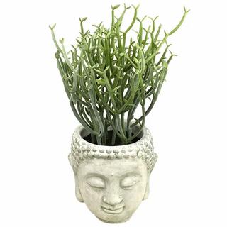 Succulent in Buddha Pot