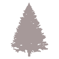 37df0d119acdab6bdfc3d277e4314b92-spruce-tree-silhouette-by-vexels_edited.png