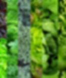 Mixed greens.jpg