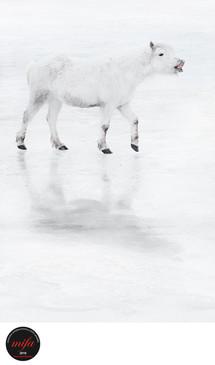 AFRAID HORSE