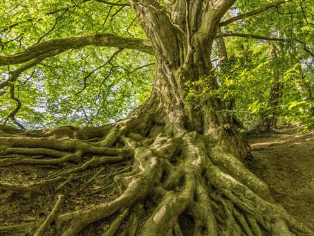 Growing Deep Roots--An Unhurried Life