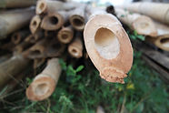 竹の活用_shutterstock_1632042028.jpg