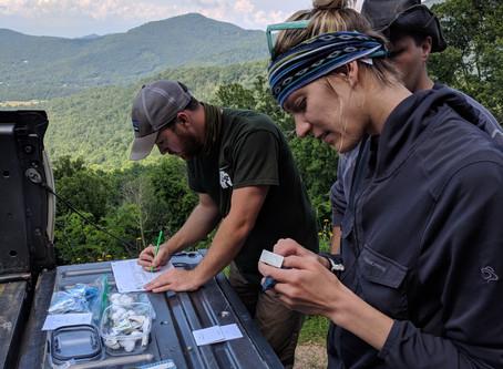 Why I started Nova Conservation: Part I