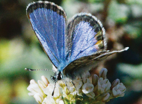 Endangered Species You've Probably Never Heard Of (But Should)