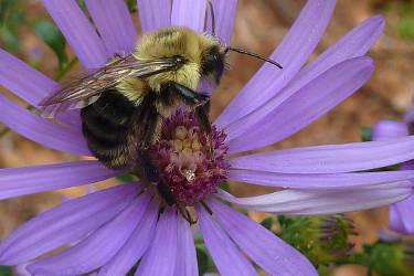 You Can Create a Pollinator Habitat in Your Yard