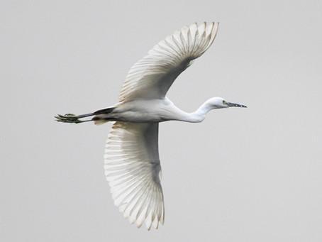 John Stott Birdwatching Day on May 8
