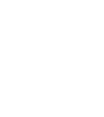 white palm.png