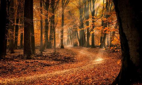 Nederlands-bos-in-de-herfst-2000x1200.jp