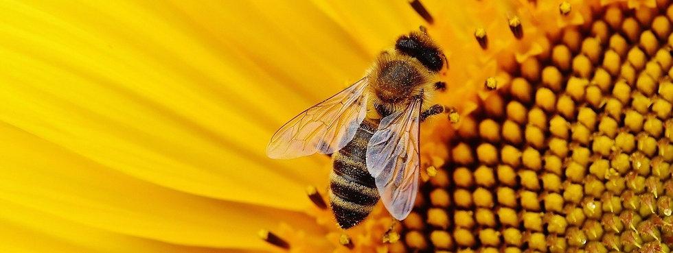propolis, produits de la ruche, bienfait, naturopathie, thérapie holistique, conseillère, La Royale, complément alimentaire, traitement naturel, médecine naturelle, remède naturel, roy-eau, phytembriothérapie, phytothérapie, élixir, tisane, probiotique, prébiotique, bilan de vitalité, corps et esprit, harmonie, maux physiques, santé, thérapeute, énergéticienne, soin énergétique, macérats de bourgeons