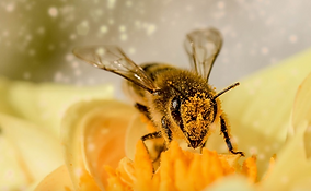 Marie Yelahiah, thérapeute énergétique et holistique, conseillère La Royale, vous aide à comprendre les bienfaits des macérats de bourgeons, de la phytothérapie, des produits de la ruche comme la propolis et des roy-eau & autres cures naturelles.