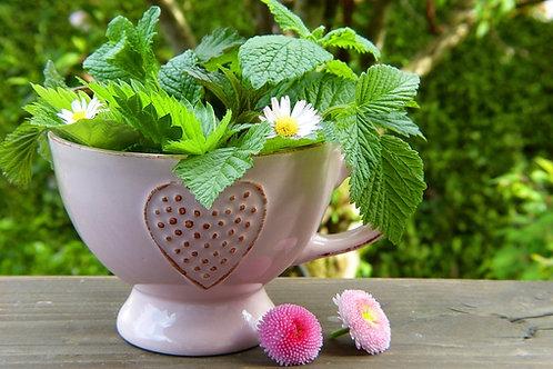 carte cadeau, naturopathie, bilan de vitalité, plantes, corps et esprit, marie yelahiah, naturel, consultation, soin, détox