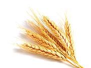 Здоровая пшеница