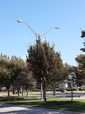 Median streetlight, Oct. 23, 2019.jpg