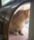Bender in WindowKitty