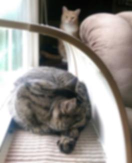 Cool Cat Clan in WindowKitty cat window bed