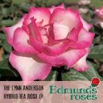 Edmunds-Rose-Footer%20Graphic_edited.jpg