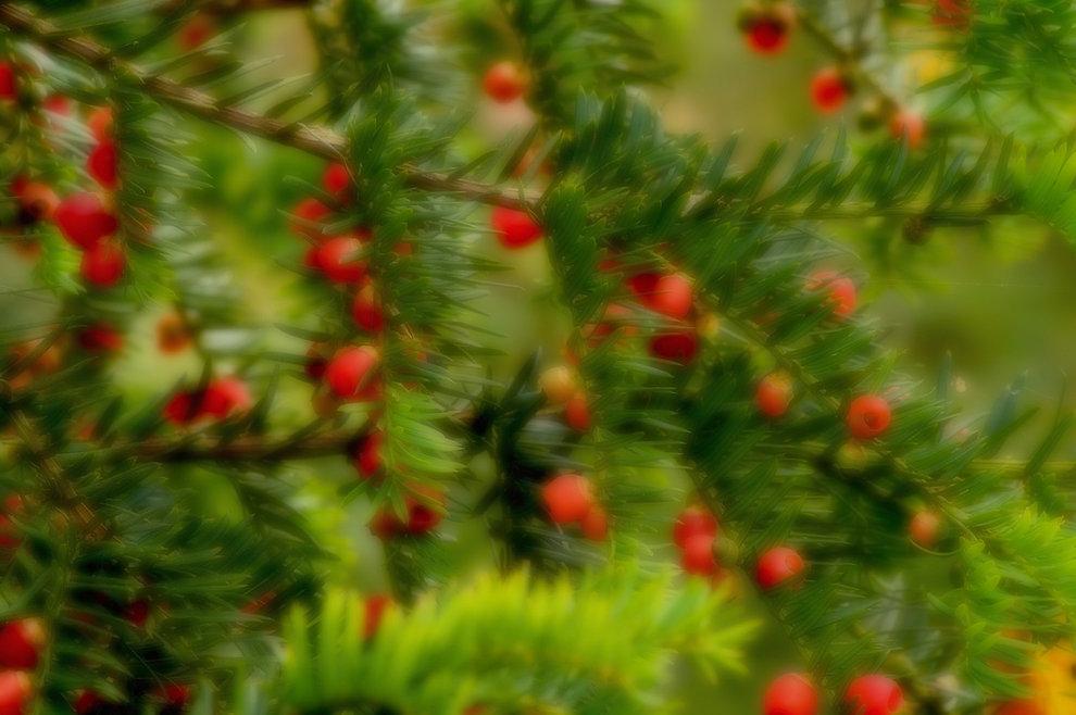 IMGP305925 + blur.jpg
