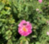 IMG_0516_edited.jpg