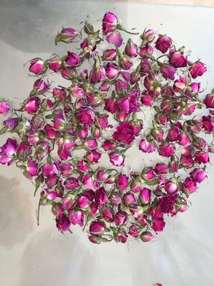 Morocco Rose