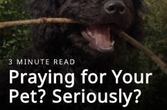 pray for your pet? seriously?