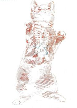 Ailuromanzia 2015 carboncino e sanguigna su carta 30x42cm