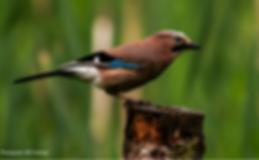 Winter-Bird-Walk-Website-event-image-650