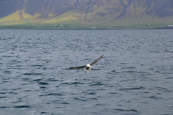 Iceland393.jpg