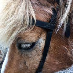 Laxnes Horseriding