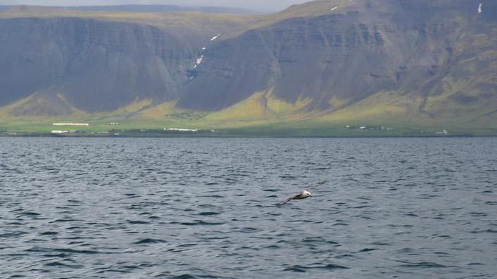Iceland392.jpg